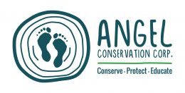 Angel Conservation